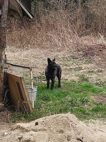 W Objezierzu znaleziono psa