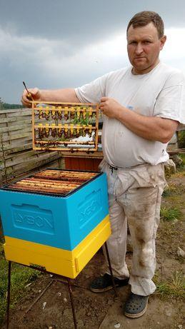 Matki pszczel na 2021 rok.