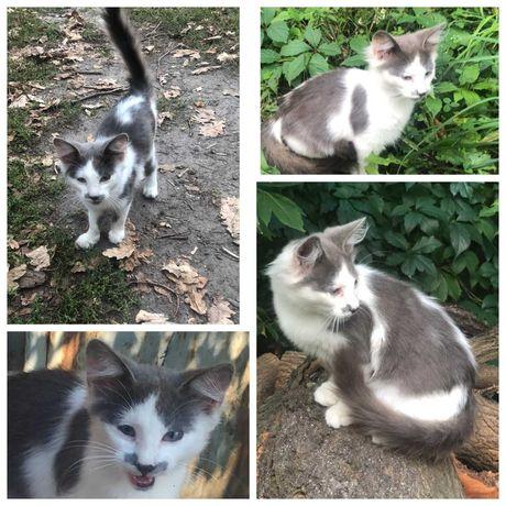 Ласковый выброшенный котенок хочет домой, на ручки, кот, котик