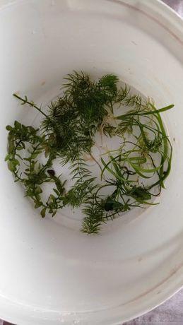 Pakiet startowy roślin do akwarium