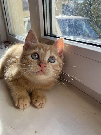 Котята маленькие