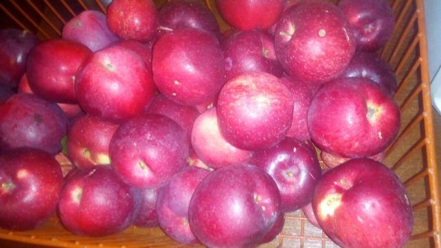 Яблука молдавський сорт