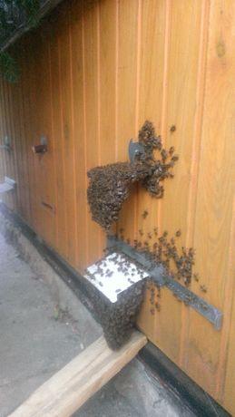 """Бджолині сім""""ї. Вуликі."""