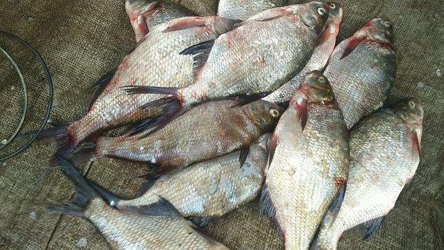 Ryby leszcze zamrożone