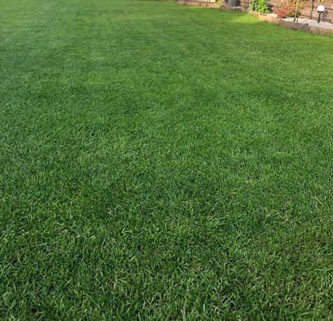 Zakładanie trawników premium, pielęgnacja ogrodów