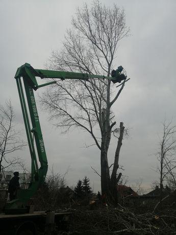 Wycinka i piel.drzew pojedynczych i na większych powierzchniach.fvat