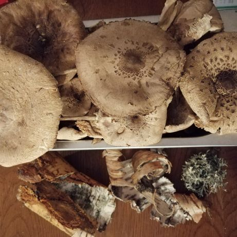 Kanie suszone - aromatyczne grzyby