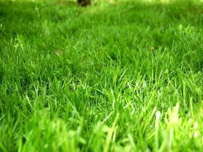 Koszenie trawników, traw , zarośli. Wycinka drzew, prace porządkowe!