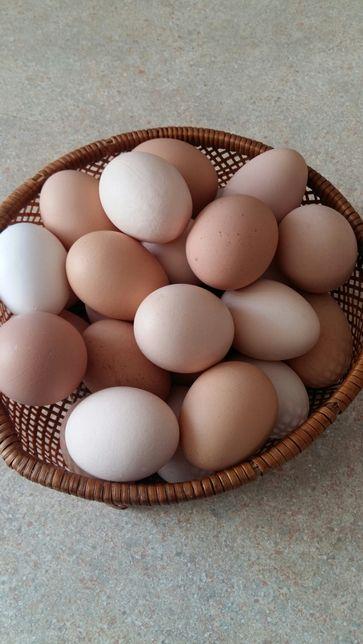 Jajka wiejskie z przydomowego chowu