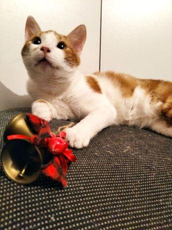 Рыжий котенок котята отдам бесплатно в добрые руки