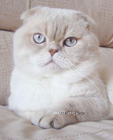 Самый ласковый кот Билли приглашает на вязку