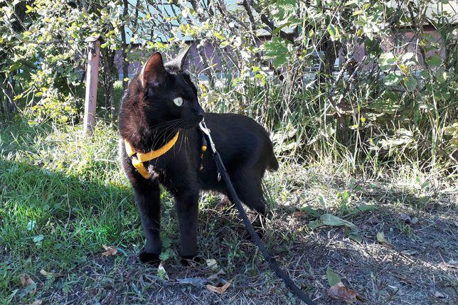 kot do adopcji- Iwanek , szuka domu