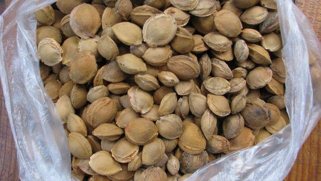 горькие косточки абрикоса(жердели)