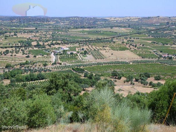 Propriedade com 7,8 ha | Exploração de vinhas, olival, mo...