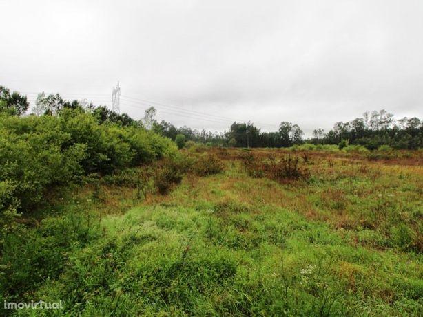 Terreno Rústico em Cantanhede