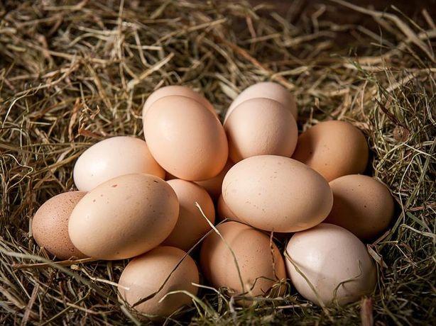 jajka z przydomowego kurnika