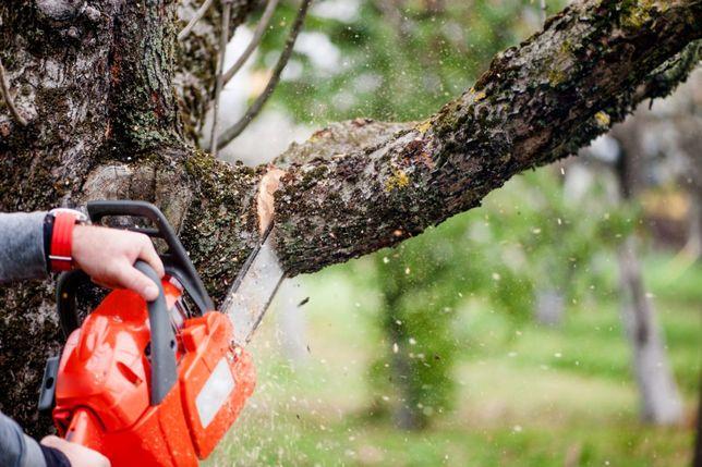 Обрізка дерев, видалення, підготовка саду до зимового періоду.