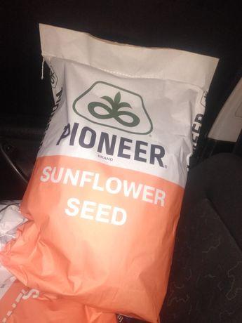Семена Пионер 66 Турция