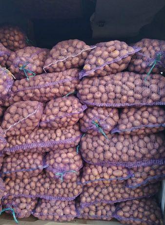 Продам Картоплю по 2грн/кг з доставкою Бела Роса,Скарб 2,Гала, Ред Лед
