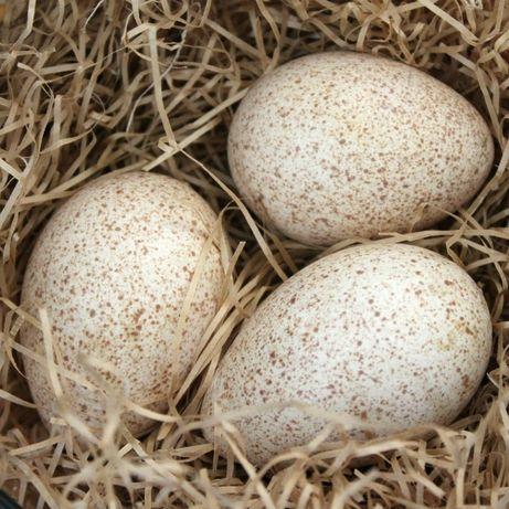 jajka z własnej hodowli na sprzedaż