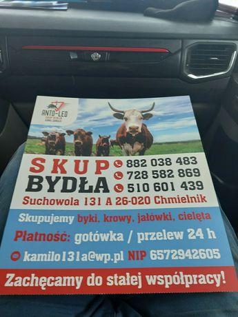 Firma ANTO-LEO Skup bydła i cieląt GOTÓWKA