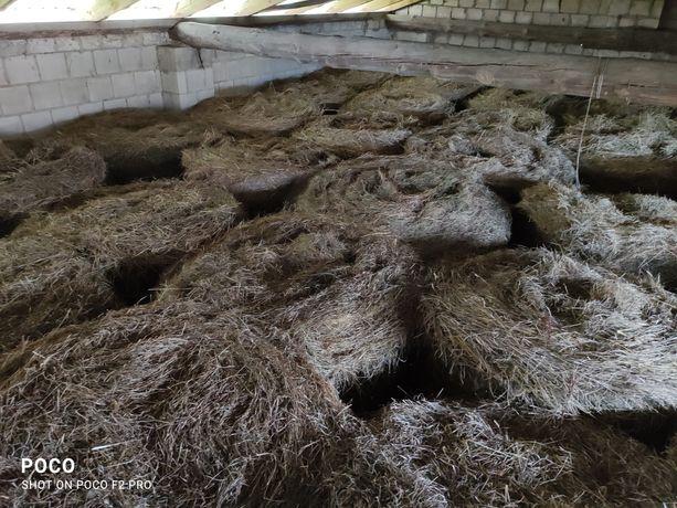 Siano ze stodoły pszenżyto