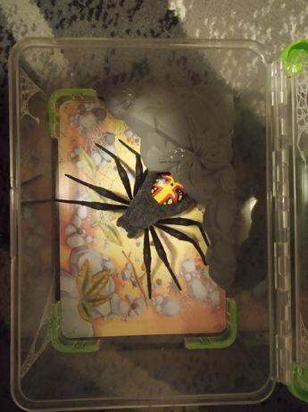 Interaktywny pająk Wild pets zabawka + terrarium
