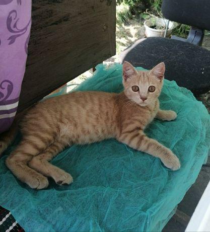 Рыжий котик 4месяца в добрые руки, котёнок, Котята, кот, кошка