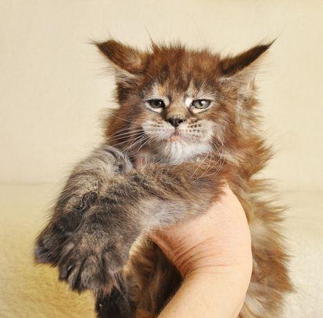 Śliczna koteczka po World Championie