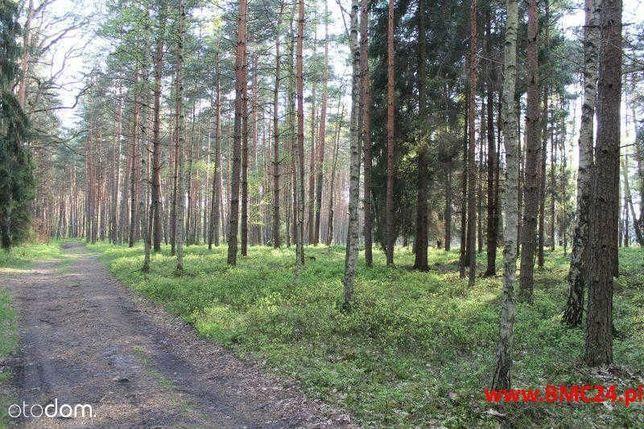 Działka leśna 1.62 ha - Mikołeska