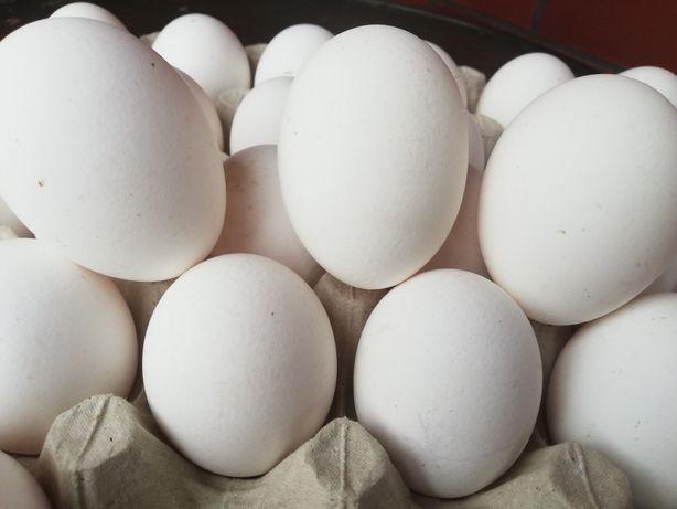 Jaja  jajka od kury
