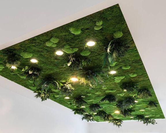 Фито-стены из стабилизированного мха и растений Ягель Кочки Плоский