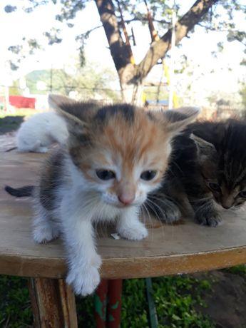 Отдам котят в добрые руки девочку и мальчика