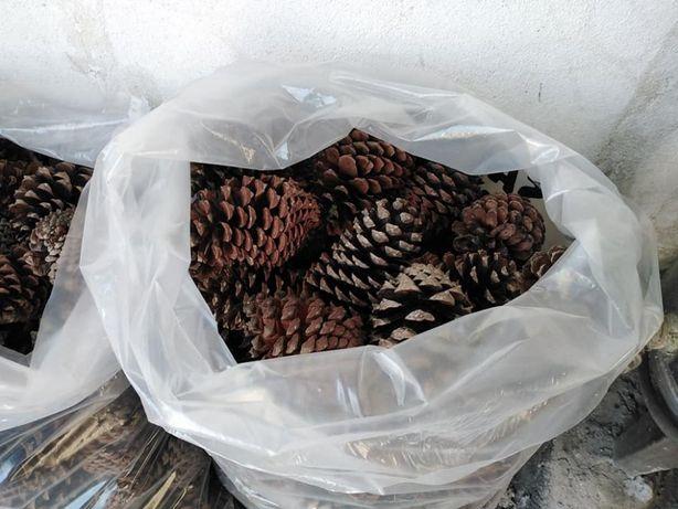 Sacos de pinhas-100pinhas