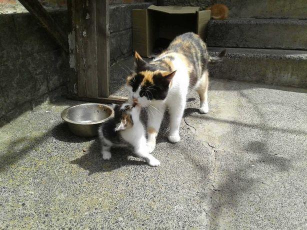 котята от кошки крысолова