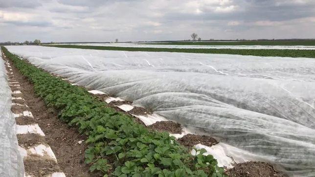 POLSKA Agrowóknina BIAŁA 15,8x100 Truskawki do Truskawek 23g ZIMOWA
