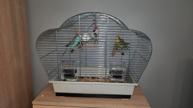 2 papugi faliste wraz z klatką.