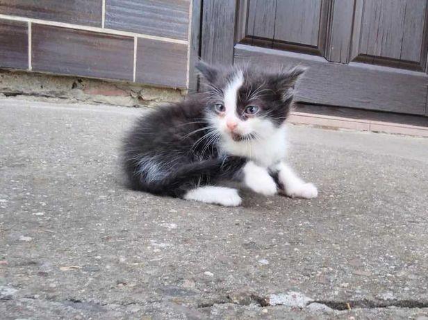 oddam w dobre ręce  4 kotki