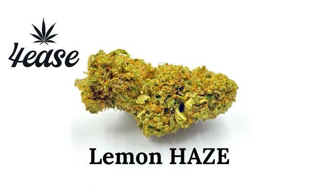 Susz CBD Lemon Haze 500g Ekstra jakość!