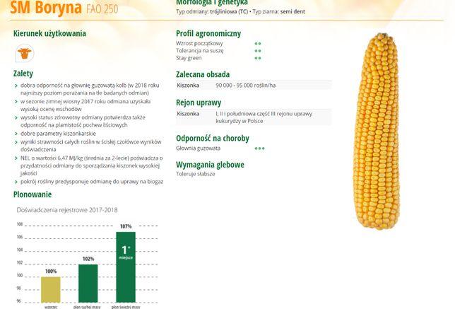 kukurydza SM BORYNA FAo250 toleruje słabsze gleby 199zł