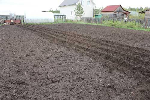 Уборка территои, перекопка огрода(культивация) и покос травы