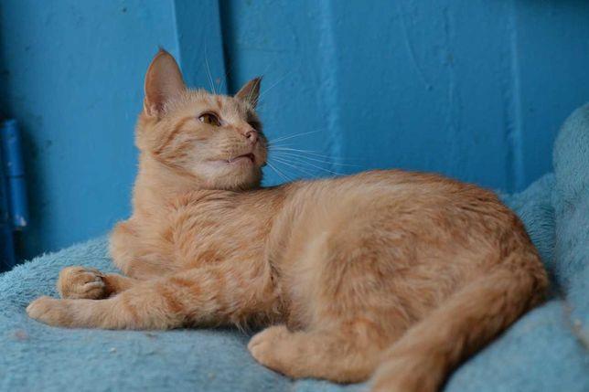 соняшно-руда молоденька кішка 9м