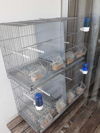 Viveiros em zinco para pássaros