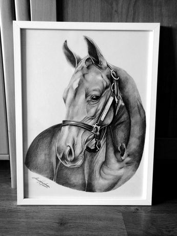 Rysunek obraz koń ramka rama
