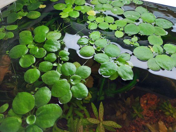 Plantas superfície Low-tech