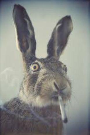 Кролики / кролі /Фландер,Полтавське срібло