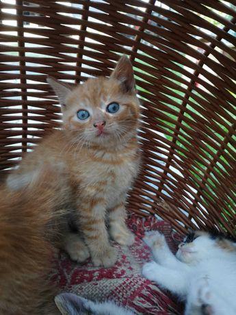 Słodkie kociak szukają nowego domu