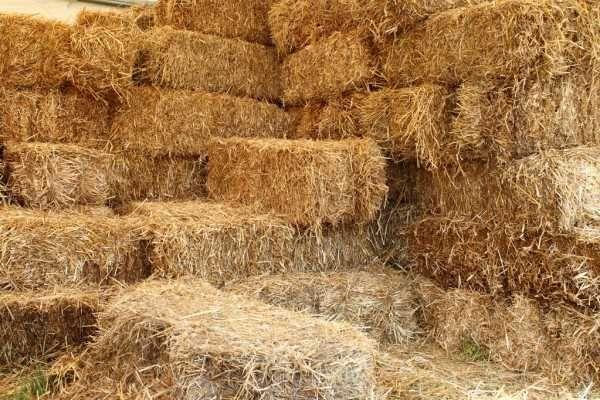 Сіно ( лугової трави ) та люцерни в тюках 2021 рік