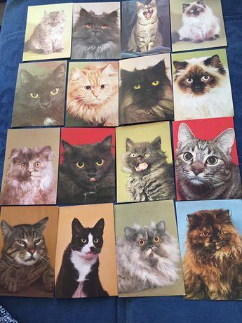 Pocztówki z kotami