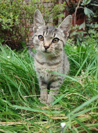 Oddam małą koteczkę Kluskę